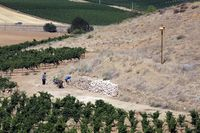 Control biológico de topillos en la provincia de Valladolid