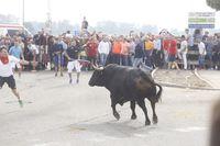 Toro de la Vega en Tordesillas