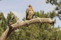 Las aves en su hábitat natural: escondite fotográfico en el muladar de Arroyo de Cuéllar