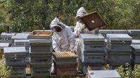 El Burgos rural explota la miel como ocio y como negocio