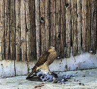 Pájaros de buen agüero