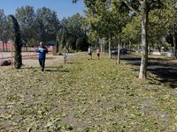 Imágenes del día después de la granizada: suciedad, lunas rotas y servicios municipales trabajando para restablecer la normalidad