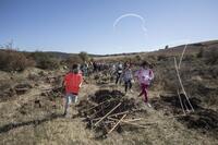 30.000 árboles para reforestar un terreno quemado
