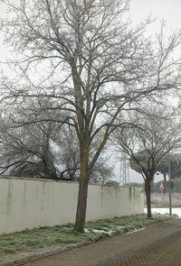 Tala de árboles en el Pinar de Antequera