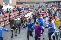 La Federación Taurina pide que se dejen celebrar encierros