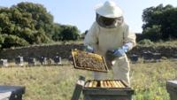 Microplásticos, el enemigo invisible de la apicultura