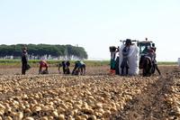 El consejero de Agricultura visita dos explotaciones de patata