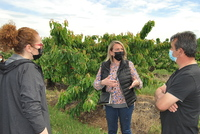 La recogida de cereza empezará en Calahorra en 10 días
