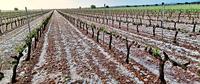 Los partes por pedrisco superan las 5.200 hectáreas