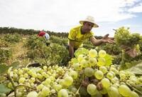 CCOO señala la precariedad de los foráneos en la agricultura