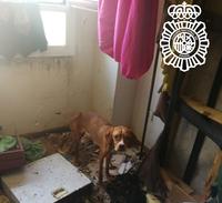 Detenido en Miranda de Ebro por un delito de maltrato animal