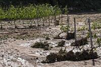 Recomendaciones para agricultores afectados por la tormenta