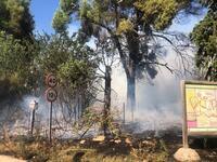 Declarado un incendio en Pozuelo que afecta a la laguna