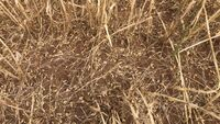El pedrisco genera graves pérdidas en cientos de hectáreas