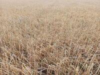 El granizo arrasa hectáreas de cultivo en La Alcarria