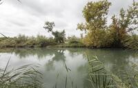 El caudal ecológico del Tajo por Aranjuez, a 8,6 m3 en 2027