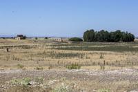Recuperarán el yacimiento arqueológico de 'El Acequión'