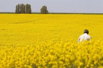 Un millón de subvención para contratar a 161 agricultores