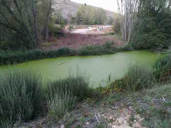 Invasión de algas en el río Golmayo