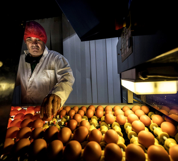 Facturas disparadas en las granjas de gallinas y pollos