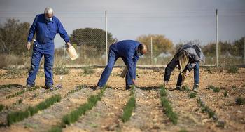 La DOP del azafrán reiniciará sus cursos en Villarrobledo