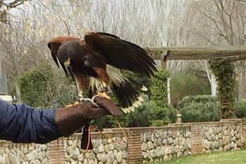 Azuqueca adjudica la labor de control de palomas y cotorras