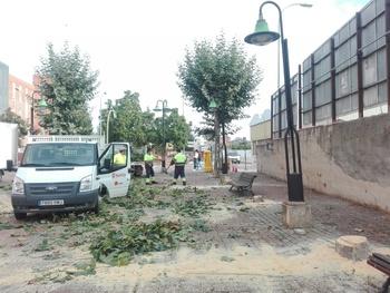 Sustituyen árboles en Eduardo Saavedra por daños en aceras
