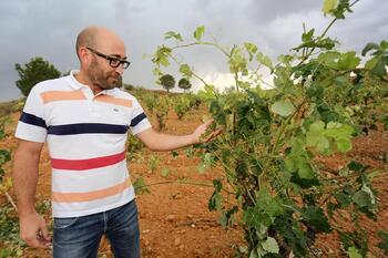 La Junta impulsa las ayudas Vinati de promoción del vino