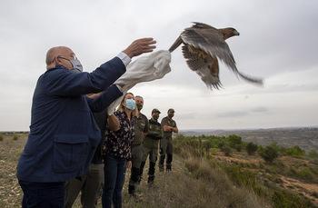 Un águila, el ave número 200 reintroducida en Albacete